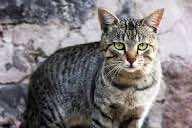 standing-cat
